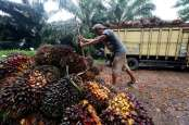 Dua Pabrik Minyak Kelapa Sawit di Mukomuko Berhenti Beroperasi