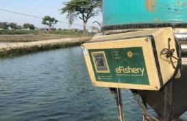 Jelajah Segitiga Rebana: Teknologi Tingkatkan Kualitas Ikan Tambak di Indramayu