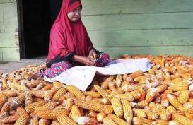 Riau Targetkan Seluruh Lahan Tertanami, Panen September & Desember