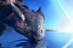 Peneliti Konfirmasi Asteroid Chicxulub Penyebab Punahnya…