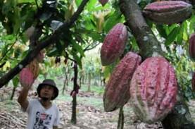 Investor Belgia Tertarik Kembangkan Kakao di Manokwari…