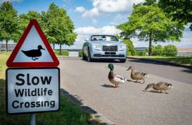 Berkebun! Pilihan Aktivitas Rolls-Royce Saat Tutup Pabrik