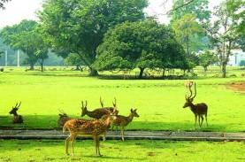 Kebun Raya Bogor Dibuka Pekan Depan hanya untuk Anggota…