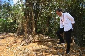 Kenapa Jokowi Tak Undang Mentan Garap 'Food Estate'…