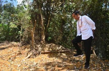 Kenapa Jokowi Tak Undang Mentan Garap 'Food Estate' di Kalteng?