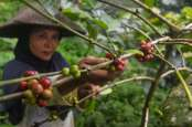 Rehabilitasi Hutan Jawa Ditarget Serap 1,38 Juta HOK