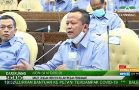 Bukan 26, Menteri Eddy Sudah Beri Izin 31 Perusahaan Ekspor Benih Lobster