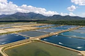 Proyek Percontohan Tambak Udang Dibangun di Lampung