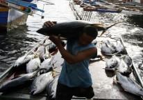 Ilustrasi - Nelayan tuna./ Bloomberg - Enrique Soriano