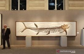 Fosil Ikan Purba Berusia 70 juta Tahun Ditemukan di Patagonia