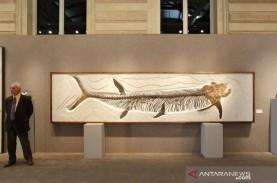 Fosil Ikan Purba Berusia 70 juta Tahun Ditemukan di…