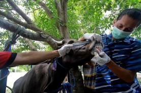 Dispangtan Imbau Warga Beli Hewan Kurban yang Miliki…