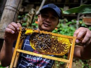 Produsen Madu di Lembang Jawa Barat Tembus Pasar Internasional