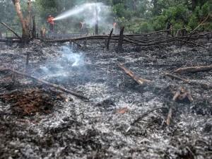 Kebakaran Lahan di Pekanbaru, Polisi Amankan Dua Pelaku Pembakar Lahan