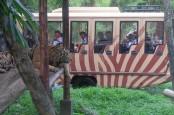 Wisatawan Boleh ke Bali, Ini Ketentuannya