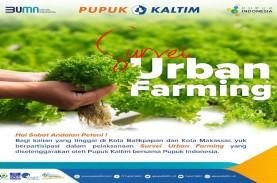 Yuk Ikut Survei Urban Farming Pupuk Kaltim, Tumbuhkan…