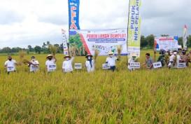 Pupuk Kaltim Panen Demplot Kemitraan Pertanian dengan KTNA Banyuwangi