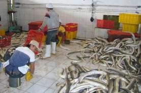 KKP Dorong Pemda dan Pengusaha Budidaya Ikan Sidat…