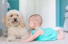 Bermain dengan Anjing, Bisa Tingkatkan  Kecerdasan Emosional Anak