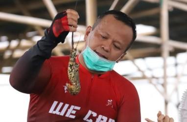 Ekspor Benih Lobster Dibuka, Mari Bersiasat Kalahkan Vietnam