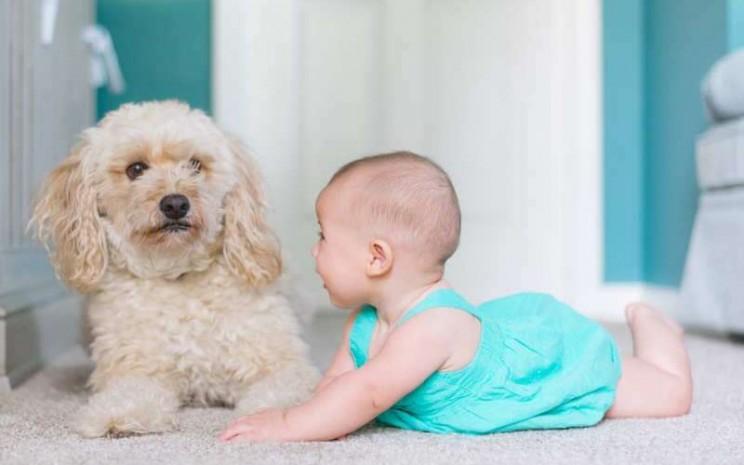 Balita sedang belajar merangkak sambil bermain dengan anjing. - Times of India