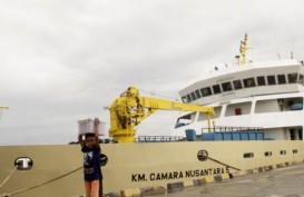 Pengangkutan Sapi oleh KM Camara Nusantara 1 Meningkat
