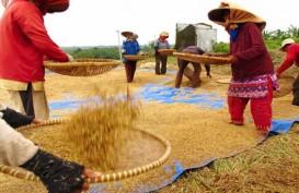 PRODUKSI GABAH : Pemkab Banyuasin Optimistis Capai Target