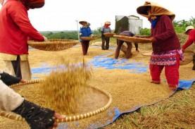 PRODUKSI GABAH : Pemkab Banyuasin Optimistis Capai…