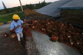 BPDPKS Bukukan Pendapatan Rp51 Triliun Dari Ekspor…