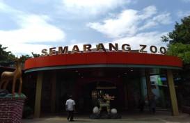 Semarang Zoo Kembali Dibuka, Ada Koleksi Baru Harimau