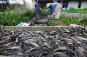 Kisah Sukses eFishery: Berawal dari Ternak Lele Hingga Bangun Perusahaan Pakan