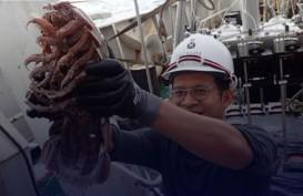 'Kecoak Laut Raksasa' Ditemukan di Laut Dalam Indonesia