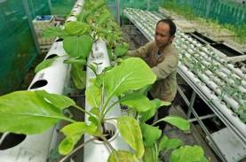 Ingin Mulai Urban Farming? Kenali Ragam Sub Sistem…