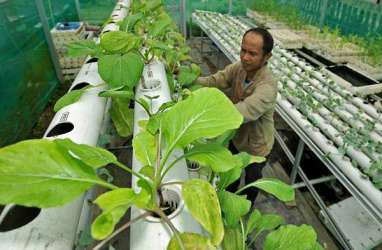 Ingin Mulai Urban Farming? Kenali Ragam Sub Sistem Budidaya