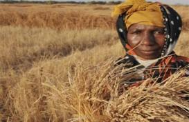 FAO: 27 Negara Dibayangi Krisis Pangan Gara-Gara Pandemi Covid-19