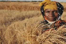 FAO: 27 Negara Dibayangi Krisis Pangan Gara-Gara Pandemi…