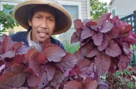 Kisah Petani Kota asal Indonesia di Amerika Serikat…