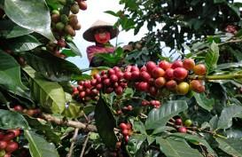 Petani Kopi di Temanggung Semringah Kembali