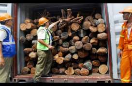 Penyelundupan Kayu Ilegal, KLHK Endus Pemalsuan Surat Sah Hasil Hutan