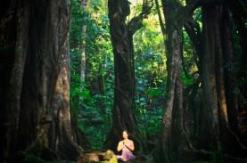 Mulai Besok, Kebun Raya Bali Kembali Dibuka