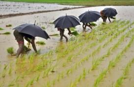 Volume Ekspor Beras Thailand Anjlok ke Level Terendah dalam 2 Dekade