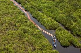Illegal Logging: Tebang Kayu Gelam Tiga Warga Sumsel…