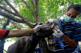 Iduladha, Dilarang Potong Hewan Kurban di Wilayah Pengendalian Ketat Corona