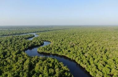 Riau Segera Miliki Desain Restorasi Ekosistem Mangrove