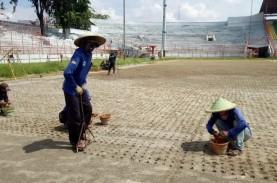 Mantap, Rumput Stadion Gelora 10 November Sudah Standar…