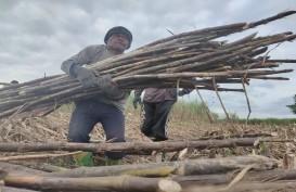 Harga Lelang Gula Petani Tebu Jatim Diharapkan Tembus Rp11.200/kg