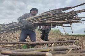 Harga Lelang Gula Petani Tebu Jatim Diharapkan Tembus…