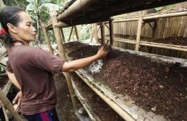 Dorong Ekonomi Warga Lumajang, PTPN XI Latih Budi Daya Cacing Tanah