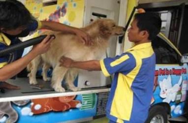 Ini 5 Pekerjaan Seru Buat Pet Lover