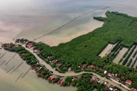Rehabilitasi Hutan Bakau Capai 200 Hektare, Ini Sebaran…
